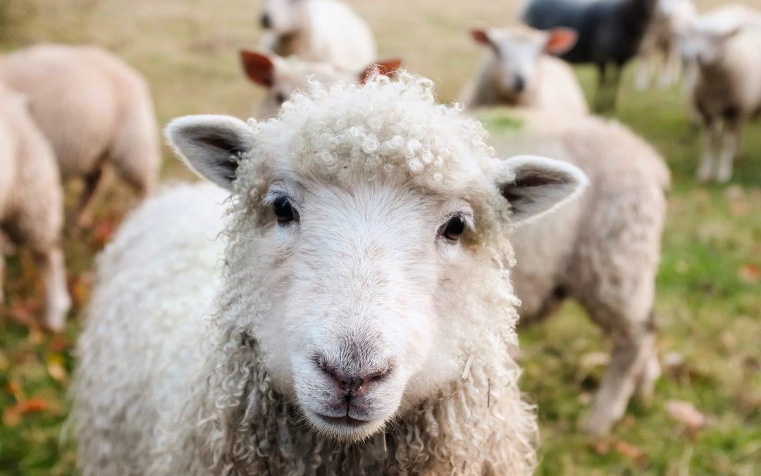 Peut-on aimer les animaux et les tuer en toute conscience ?