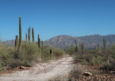 Cactus mexique A3