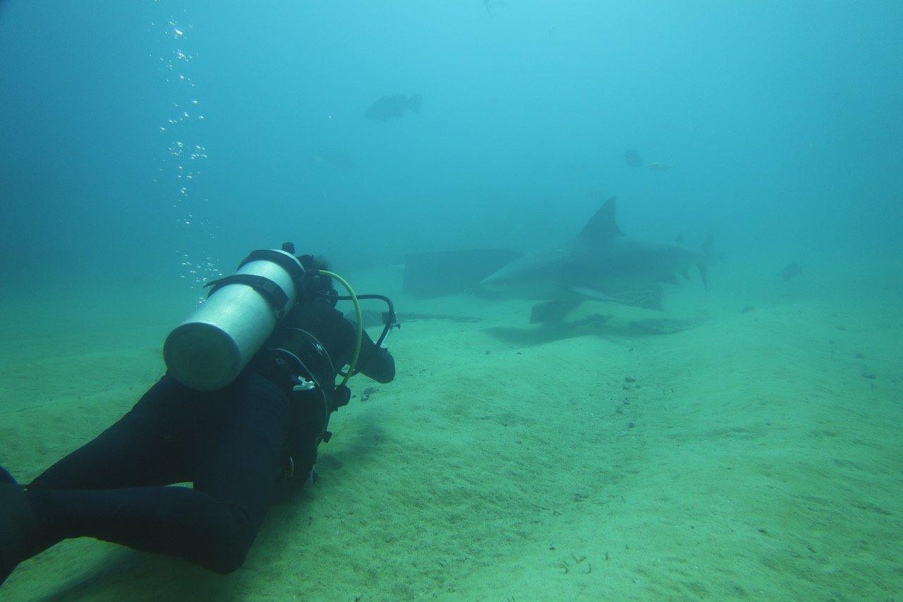 Requin pelagios A2