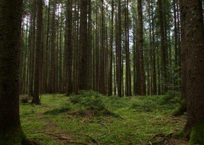 Virgo : au cœur des forêts vierges de Roumanie