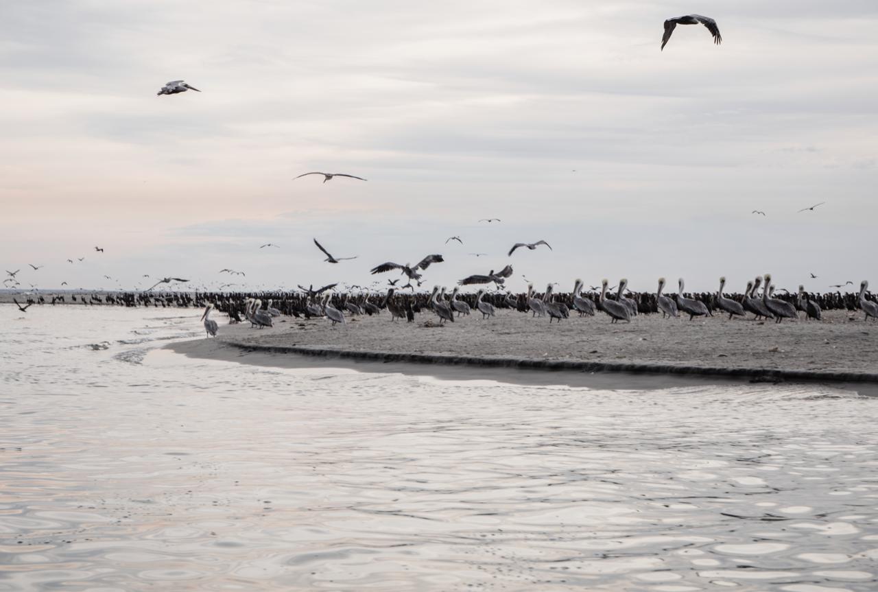 oiseaux JPEG A3