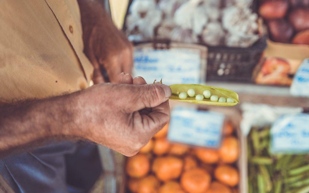 dossier : alimentation durable
