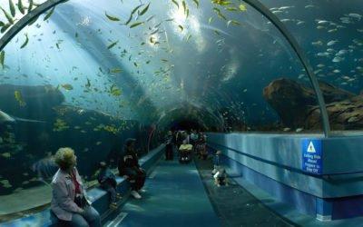Remettre de l'océan dans nos vies